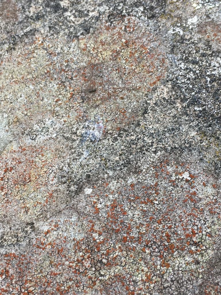 Rare Lichen on a Tomb